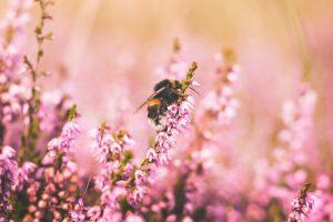 Bug Bites and Stings